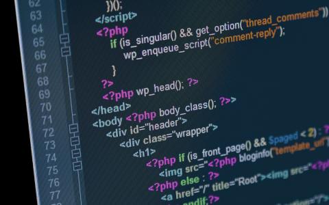Web Designer vs Web Developer: Which career should you choose?