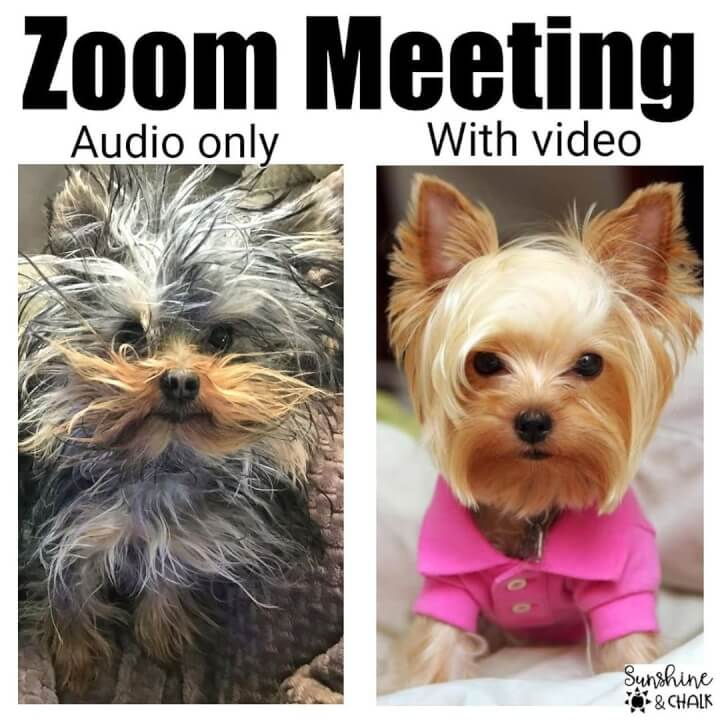 zoom meeting dog hairstyles meme