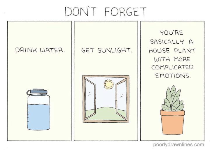 houseplant meme