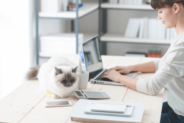 woman working from home with cat on desk